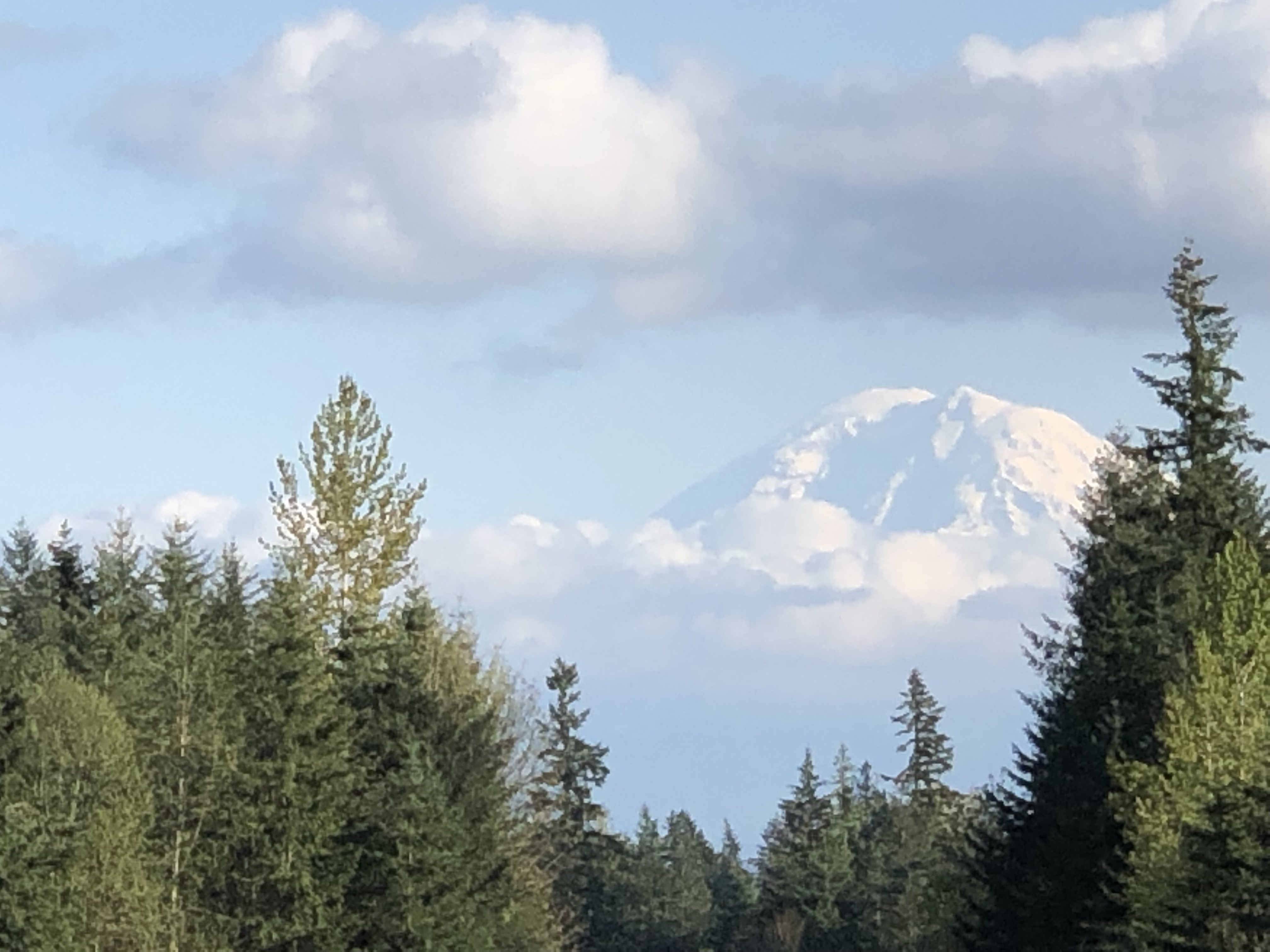 Mt. Rainier with snow and clouds, and trees in the near distance.